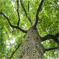 Top Tree Service Newark