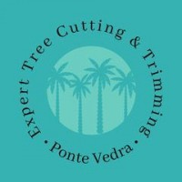 Expert Tree Cutting & Trimming