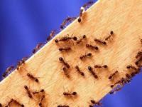Pest Control Spring Hill