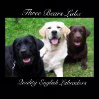 Three Bears Labradors