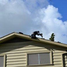 Roofing Elgin